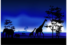 Silhouettte of animal wildlife Stock Photos