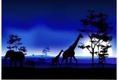 Silhouettte of animal wildlife Stock Photos