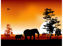 Silhouettte of animal wildlife Stock Images