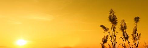 Silhouetzonsondergang en geel hemelbehang, achtergrond Stock Fotografie