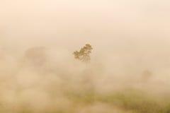 Silhoustte des Baums im Nebel Stockfotografie