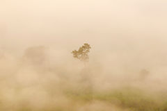 Silhoustte of tree in the mist. Close up of tree from the hill.Phu Lang Ka Forest Park is in Chiang Kham District and Pong District. It is around 900-1,720 Stock Photography