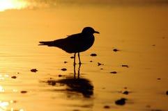silhoute чайки Стоковое Фото