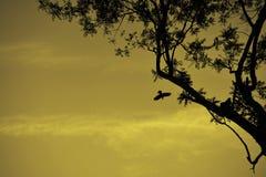 Silhouteemening van de vogel die van de boom opstijgen stock fotografie