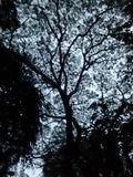 Silhoutte树黑色 库存图片