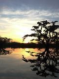 Silhoutte дерева над озером во время захода солнца в путешествии в cuyabeno, самом большом национальном парке в эквадорском amazo стоковое фото rf