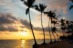 Silhoutte дерева на восходе солнца Стоковое фото RF