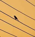 Silhoutte птицы сидя на электрических проводах Стоковые Фото
