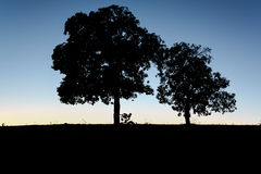 Silhoutte树 免版税库存图片