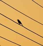 Silhoutte of bird sitting on electrical wires. Silhouette of a bird sitting on electrical wires in the evening Stock Photos