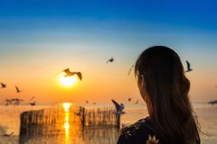 Silhoutte of birds flying and young woman at sunset royalty free stock photo
