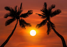 Silhoutte coconut palm trees in sunset Royalty Free Stock Photography