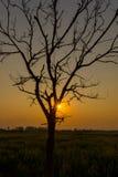 Silhoutte da árvore e de ilhas solitárias no nascer do sol Imagens de Stock Royalty Free