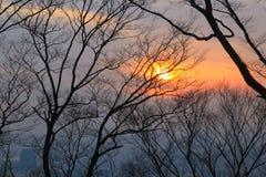 Silhoutte dei rami contro il tramonto variopinto Fotografie Stock