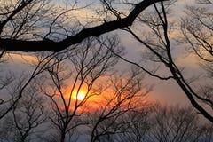 Silhoutte dei rami contro il tramonto variopinto Fotografie Stock Libere da Diritti