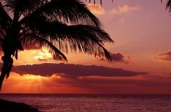 Silhoutte di una palma nel tramonto Immagine Stock