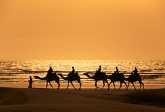 A silhoutte of a dromedary and Tourists. Tourists ride camels train on the sea at sunset, Morocco Stock Images