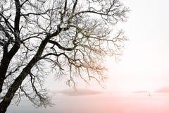 Silhoutte eines Baums durch die Küste von Norwegen Lizenzfreie Stockfotos