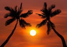 Silhoutte-Kokosnuss-Palmen im Sonnenuntergang Lizenzfreie Stockfotografie