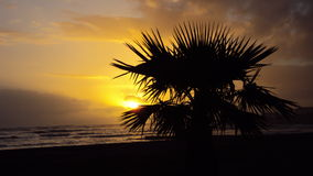 Silhoutte palm tree against a sunset backdrop Royalty Free Stock Photo