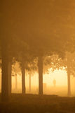 Silhoutte of person a misty morning Stock Image