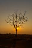 Silhoutte van eenzame boom en eilanden bij zonsopgang Stock Afbeelding