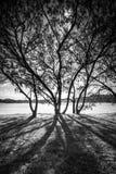 Silhoutte y sombras del árbol Fotografía de archivo libre de regalías