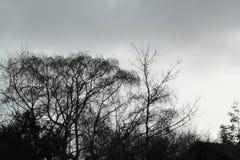Silhoutted反对灰色天空的树枝 库存照片