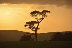Silhoutted träd Arkivbild