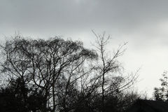 Silhoutted Tree branches against Grey Skies Stock Photos