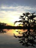 Silhoutten av ett träd över en sjö under solnedgång i turnerar i cuyabenoen, den största nationalparken i ecuadorian amazone royaltyfri foto