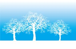 Silhouttes of trees. White silhouttes of naked winter trees Stock Photos