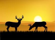Silhouuette dos cervos Imagem de Stock