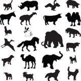 Silhueta animal   Foto de Stock Royalty Free