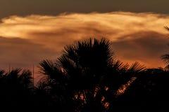 A silhueta bonita Fotos de Stock