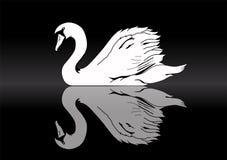 Silhueta branca da cisne na reflexão do lago ilustração do vetor