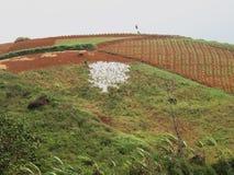 Silhueta branca uma arte 2 da terra Foto de Stock
