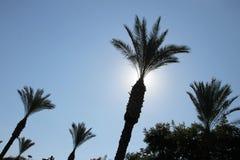 Silhueta brilhante da palmeira no céu azul claro fotografia de stock royalty free