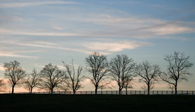 Silhueta crepuscular das árvores Foto de Stock