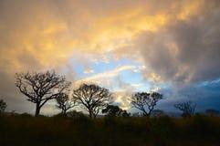 Silhueta da árvore Fotos de Stock Royalty Free
