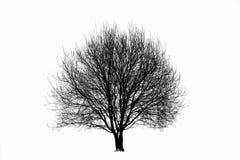 Silhueta da árvore Foto de Stock Royalty Free