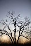 Silhueta da árvore Fotografia de Stock