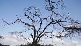 Silhueta da árvore fotos de stock