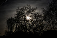 Silhueta da árvore alta Imagem de Stock Royalty Free
