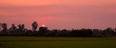 A silhueta da árvore com por do sol bonito sobre o arroz coloca no feriado da noite no campo de Tailândia Foto de Stock