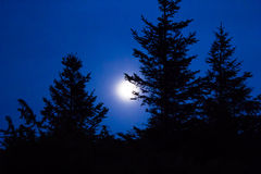 Silhueta da árvore contra o céu noturno e a Lua cheia Fotografia de Stock Royalty Free