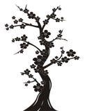 Silhueta da árvore da flor de cereja imagem de stock