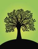 Silhueta da árvore de Blach Fotografia de Stock Royalty Free