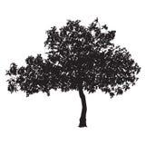 Silhueta da árvore de figo Imagens de Stock