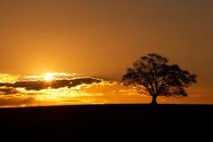 Silhueta da árvore do por do sol foto de stock royalty free